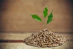 Biomass. Pellets wood plant photography fuel closeup stock image