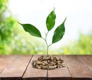 Biomass pellets Stock Image