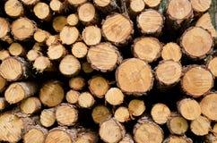 Biomassa Imagens de Stock