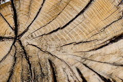 Biomassa Arkivbilder