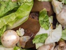 Biomassa con salat ed i funghi Fotografie Stock Libere da Diritti