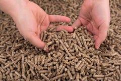 Biomassa di legno in mani Fotografia Stock