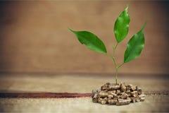 Biomassakorrels Stock Fotografie