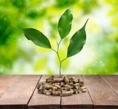 Biomassakorrels Royalty-vrije Stock Afbeeldingen