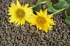 Biomasse de tournesol dans les granules photographie stock libre de droits
