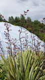 Biome d'Eden Project à St Austell les Cornouailles image stock