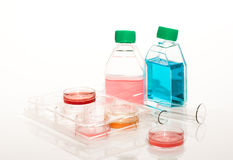 Biomedical diagnostic. Equipment of scientific laboratory for experiments and research. Cell culture for biomedical diagnostic. Plastic Labware: confocal dishes Royalty Free Stock Photos