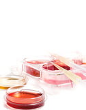 Biomedical diagnostic laboratory. Science laboratory. Equipment and tools of scientific lab for experiments and research. Cell culture for the biomedical royalty free stock photo