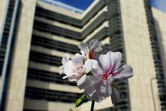 Biomedical forskningbyggnad 2, UCSD royaltyfri bild
