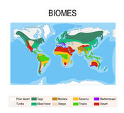 Biomes. Terrestrial ecosystem. Is a community of living organisms. Biotope: montane, desert, tropics, savanna, steppe, mediterranean, mixed forest, taiga Stock Images