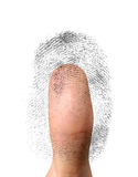 Biometric Identification. Close-up of a fingerprint and a thumb. Biometric identification, security concept. Isolated on white background Stock Photography