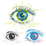 Biometrics. Vector image of eyes security Royalty Free Stock Photography