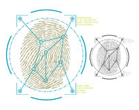 Biometrics. Vector image of fingerprint security Stock Photo