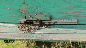 Biomvändnektar in i bikupan för honungskaka för bi för flyg för honungnärbildbi stock video
