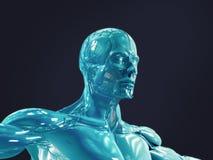 Bionisk man Arkivfoto