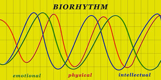 Biorhythm Foto de Stock