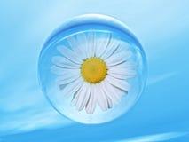 biorhythm στοκ εικόνες με δικαίωμα ελεύθερης χρήσης