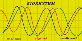 Bioritme stock illustratie