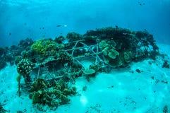 Biorocks av korallrever i Gili, Lombok, Nusa Tenggara Barat, Indonesien undervattens- foto Royaltyfri Foto