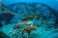 Biorocks av korallrever i Gili, Lombok, Nusa Tenggara Barat, Indonesien undervattens- foto Royaltyfri Fotografi
