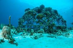 Biorocks av korallrever i Gili, Lombok, Nusa Tenggara Barat, Indonesien undervattens- foto Royaltyfria Bilder