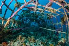 Biorocks av korallrever i Gili, Lombok, Nusa Tenggara Barat, Indonesien undervattens- foto Arkivfoto