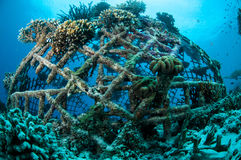 Biorocks of coral reefs in Gili, Lombok, Nusa Tenggara Barat, Indonesia underwater photo Stock Photos