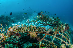 Biorocks von Korallenriffen in Gili, Lombok, Nusa Tenggara Barat, Indonesien-Unterwasserfoto Stockfotos