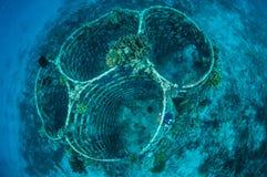 Biorocks von Korallenriffen in Gili, Lombok, Nusa Tenggara Barat, Indonesien-Unterwasserfoto Stockfoto