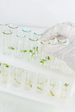 Biosciences images stock