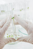 Biosciences. Two hands in rubber glove holding a test-tube with biological material closeup Royalty Free Stock Photos
