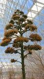 Biosfär 2 - inre vegetation Royaltyfria Bilder