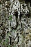 biosfera Costa De Del rzut słusznych kilometrów las Marbella halna naturalna natura nieves raju parka rezerwy skały s sierra zolu Zdjęcie Royalty Free