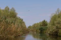 Biosfera del delta de Danubio imagen de archivo