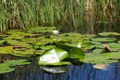 Biosfera del delta de Danubio imágenes de archivo libres de regalías