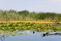 Biosfera del delta de Danubio imagenes de archivo