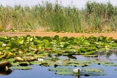 Biosfera del delta de Danubio imagen de archivo libre de regalías