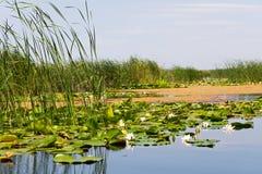 Biosfera del delta de Danubio fotografía de archivo libre de regalías