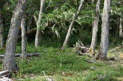 Biosfera di Capo Horn immagini stock