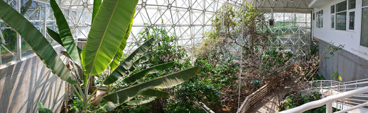 Biosfera 2 - vegetazione interna fotografie stock libere da diritti