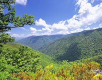 Biosphere. Forest National Park Muniellos in Asturias, Spain Stock Images
