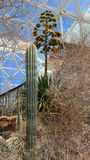 BioSphere 2 - Interior Desert Eco System Royalty Free Stock Images