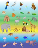 Biosphere. NAture info graphic with animals birds nd insects Stock Image