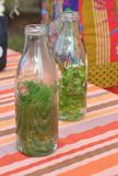 Biotechnilogy.Herbal drink. Natural herbal drink with dill and mint royalty free stock photos