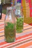 Biotechnilogy Växt- drink Royaltyfria Foton