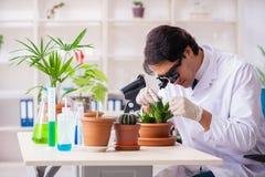 Biotechnologia chemik pracuje w lab obraz stock