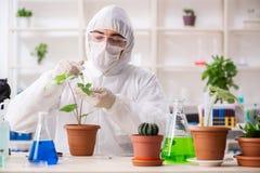 Biotechnologia chemik pracuje w lab fotografia stock