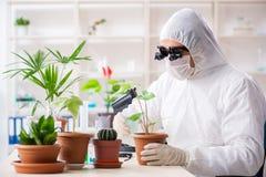 Biotechnologia chemik pracuje w lab zdjęcie royalty free