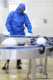 Biotechnologia - gmo jajeczny fabryczny pojęcie obraz stock
