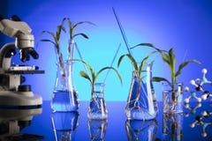 Biotechnologia i kwiecisty nauka temat Zdjęcie Stock